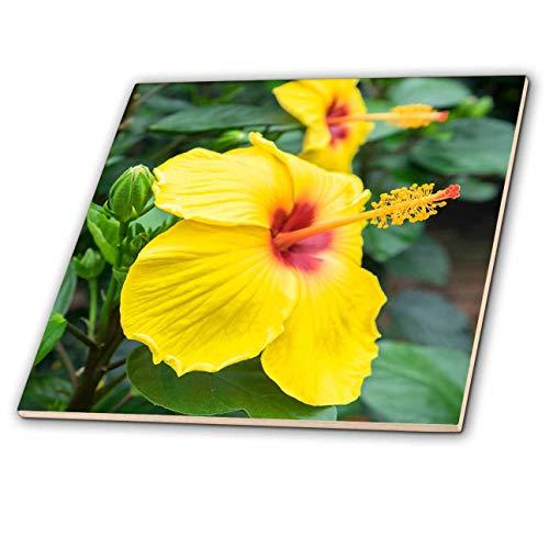 3dRose Danita Delimont - Flowers - Sunny Wind, Hibiscus - 12 Inch Ceramic Tile (ct_313913_4)