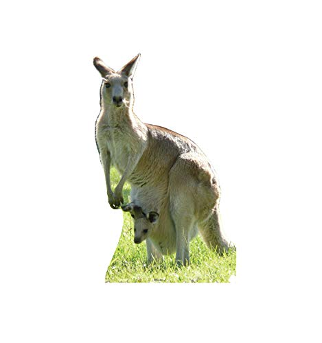 - Advanced Graphics Kangaroo Life Size Cardboard Cutout Standup