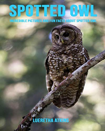 (Spotted Owl: Incredible Pictures and Fun Facts about Spotted Owl)