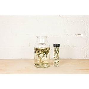 Silver Needle Loose Leaf Chinese Tea - Hong Kong Tea Company Sourced Premium AAA Grade Ultra-Fine White/Green Tea - 1oz