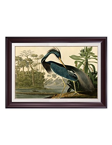 DECORARTS Louisiana Heron by John James Audubon. Reproductions. Giclee Print w/Acrylic Coating & Museum Quality Framed Art for Home Decor. Picture Size: 20x30, Framed Size: ()