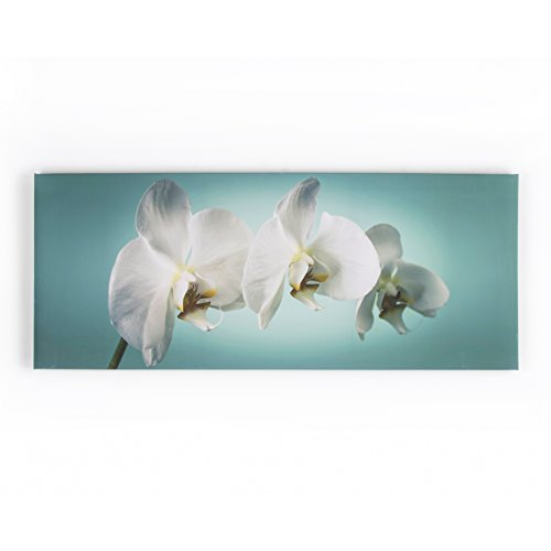 (Graham & Brown 40-615 Teal Orchid Printed Canvas Art)