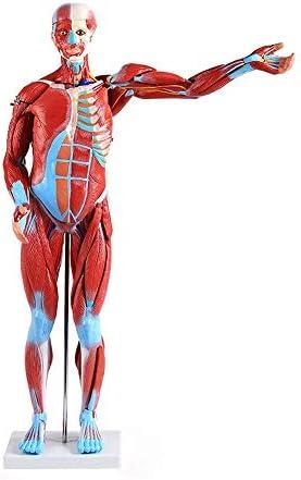 Zestaw sportowy nr 6 (mięśnie ramion)