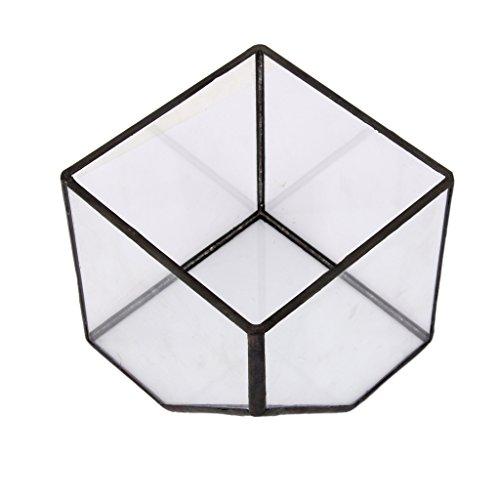 Glasterrarium Cube Fairy Gartenhaus Gewaechshaus Groesse S