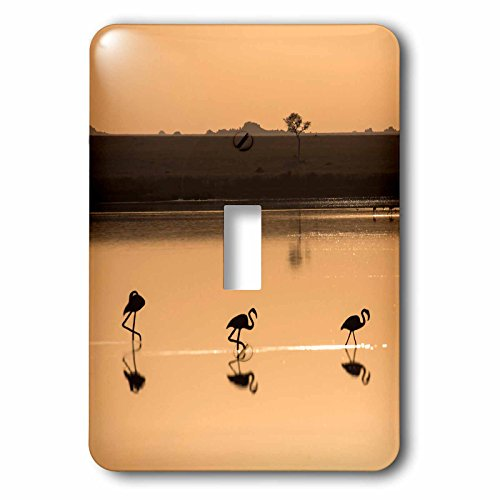 3dRose lsp_187483_1 Africa, Tanzania, Serengeti, Greater Flamingos In A Small Lake, Toggle Switch by 3dRose