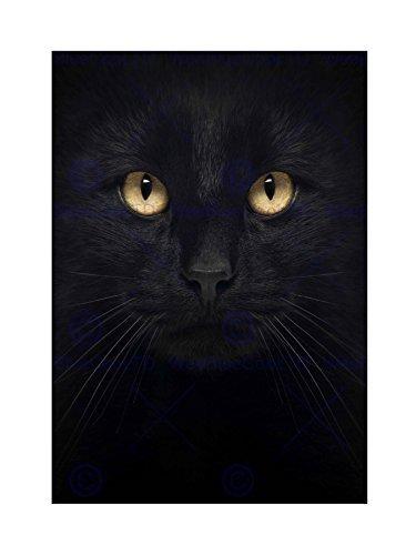 The Art Stop PHOTO COMPOSITION CLOSE UP PET BLACK CAT FACE EYES FRAMED ART PRINT