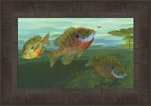 Bluegills by Randy McGovern 11x15 Sunfish Fish Fishing Lake Framed Art Print Wall Décor Picture