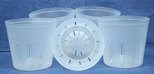 coMarket Clear Plastic Pot for Orchids 3 inch Diameter - Quantity 5