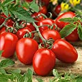 Organic Roma Tomato Seeds, 300+ Premium Heirloom Seeds!, ON SALE!, (Isla's Garden Seeds), Non Gmo Organic, 85% Germination