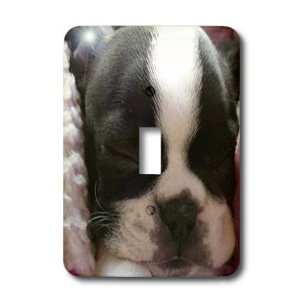 3dRose lsp_22237_1 Boston Terrier Puppy Single Toggle Switch