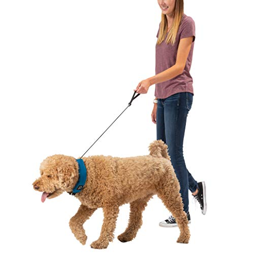 (Nite Ize Raddog All-in-One Collar + Leash Combo, Dog Collar with Built-in Retractable Leash, Blue, Medium 16