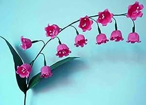 50 PC / bolsa de lirio de las semillas Valle Flor de interior Plantas raras Campana Orquídea rico aroma Bonsai balcón en maceta del jardín de DIY Negro