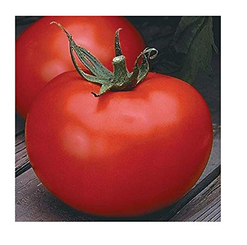 David's Garden Seeds Tomato Slicing Better Boy SL0908 (Red) 25 Non-GMO, Hybrid Seeds ()