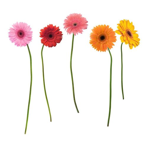 RoomMates RMK1279GM Gerber Daisies Peel & Stick Giant Wall Decals