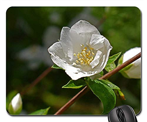 Drop Mock - Mouse Pad - Rain-Wet Mock Orange Flowers Raindrops Wet Blossom