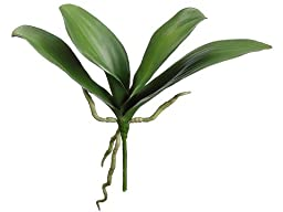 Silk Plants Direct Phalaenopsis Orchid Leaf Plant (Pack of 12)