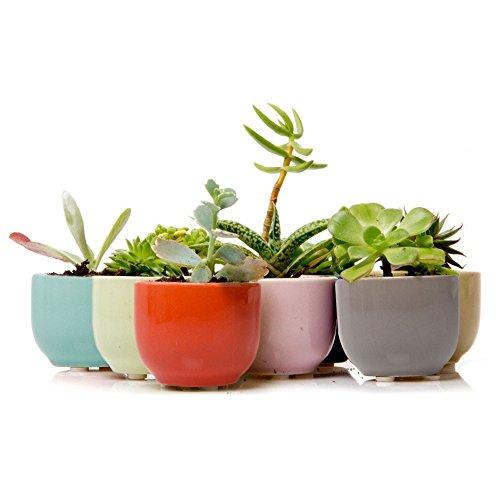 Chive – Succulent Cup, Small Round Ceramic Succulent and Cactus Planter for Mini Plants, Air Plant Holder, Bulk 9 Pack – Grey, Yellow, Orange, Pink, Teal, Green, Purple, Brown, Cobalt Blue