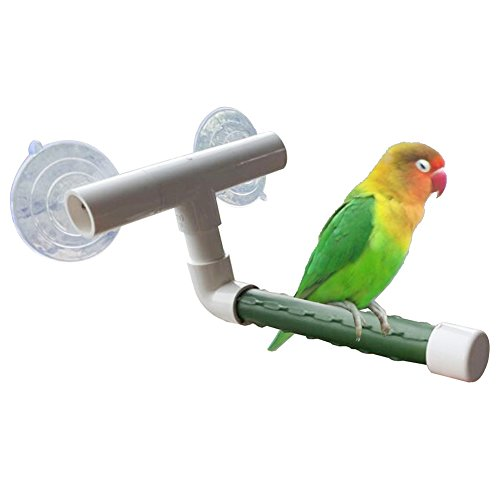 Afco Birds Pet Wall Suction Cup Paw Grinding Stand Shower Perches Parrot Budgie Toys Brain Game Training Tool size 21cm x 17cm x 10cm - Green Bird Conure Cheeked