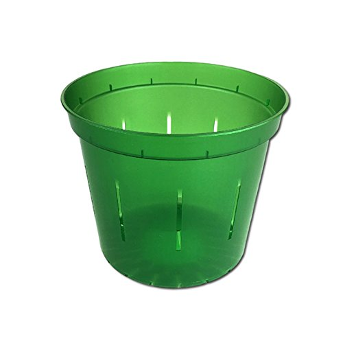 Slotted Clear Orchid Pots Emerald
