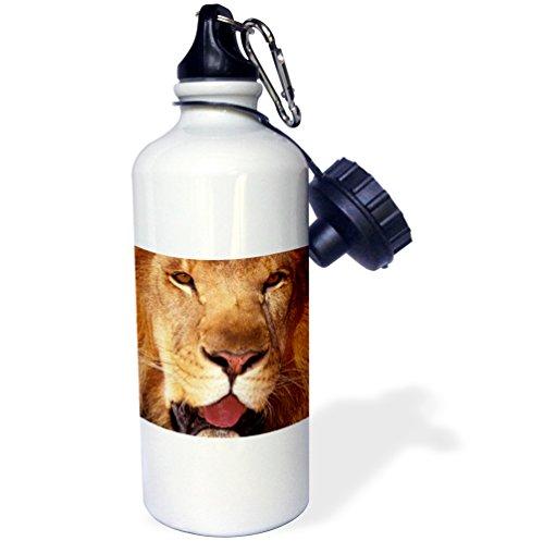3dRose wb_84672_1 Africa Male African Lion (Panthera Leo)-Na02 Swe0033-Stuart Westmorland Sports Water Bottle, 21 oz, - African Panthera Lion Leo