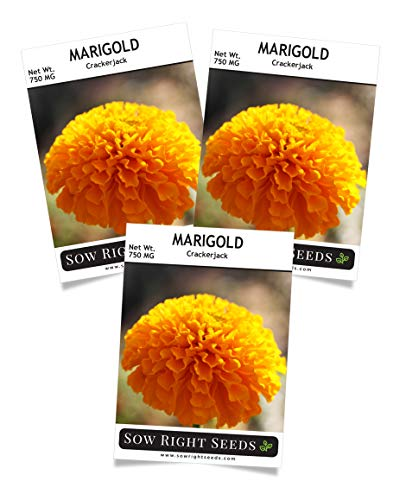 (Sow Right Seeds Crackerjack Marigold Seeds - Full Instructions for Planting, Beautiful to Plant in Your Flower Garden; Non-GMO Heirloom Seeds; Wonderful Gardening Gift (3))