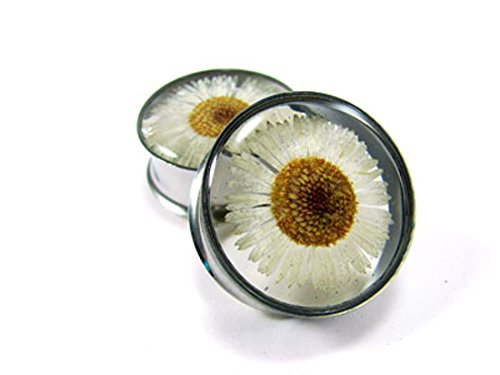 Mystic Metals Body Jewelry Embedded Real Daisy Flower Plugs - Sold As a Pair (1