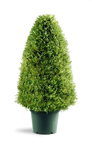 National Tree 30 Inch Upright Juniper Tree in Green Round Plastic Pot (LCY4-30)