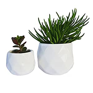Modern small succulent planters set of two Modern plant pots