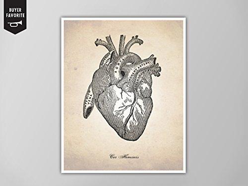 Amazon Human Heart Human Anatomy Heart Art Print Human