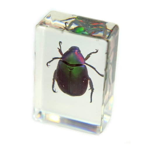 REALBUG Chafer Beetle Paperweight (1.8x1.1x0.8)