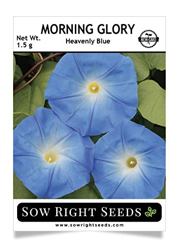 Sow Right Seeds - Morning Glory Heavenly Blue, Non-GMO Heirloom Seeds, Full Instructions for Planting, Beautiful in Your Flower Garden and Landscape; Non-GMO Heirloom Seeds; Wonderful Gardening -