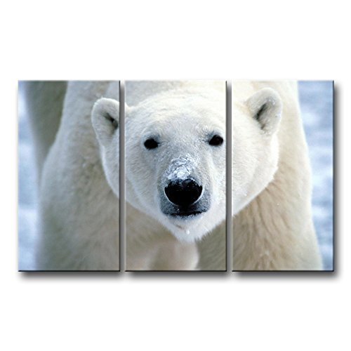 So Crazy Art 3 Piece Wall Art Painting Polar Bear Face Closeup Prints On Canvas The Picture Animal Pictures Oil For Home Modern Decoration Print Decor (Polar Bear Pictures)