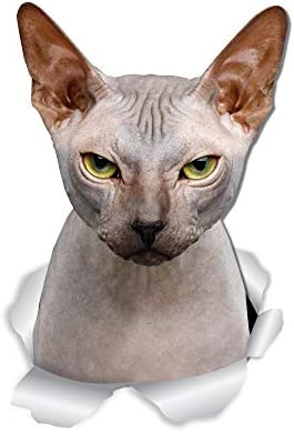 Winston & Bear Grumpy Sphynx Cat Wall Decals - 2 Pack - Sphynx Cat Toilet Sticker - 3D Cat Car Window and Bumper Sticker - Retail Packaged Sphynx Cat Gifts 19