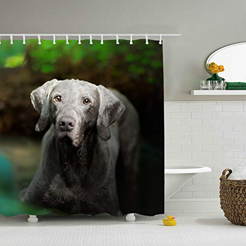 Gray Weimaraner Shower Curtain with Hooks for Bathroom, Mildew Resistant, Anti-Bacterial and Waterproof 65 × 71 inch ()