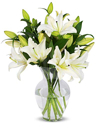 Benchmark Bouquets 8 Stem White Lily Bunch, With Vase (Fresh Cut Flowers) (Delivery Calla Lilies)