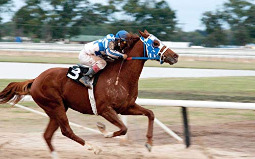 Secretariat Belmont Stakes Wins 8 x 10 Metal Aluminum Tin Gloss Sign