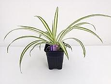 the 5 best office plants - Office Plants