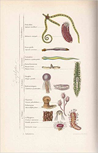 Livres télécharger mp3 gratuitement Musée d'histoire naturelle, comprenant la cosmographie, la géologie, la zoologie, la botanique, par M. Achille Comte PDF ePub MOBI
