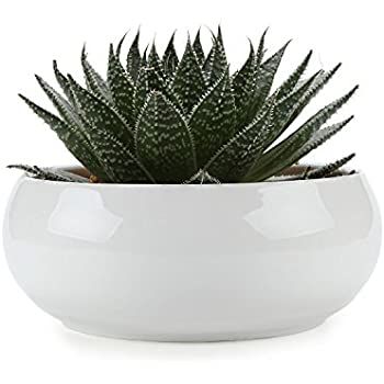 T4U 6.5 Inch Ceramic White Round Simple Design succulent Plant Pot/Cactus Plant Pot Flower Pot/Container/Planter