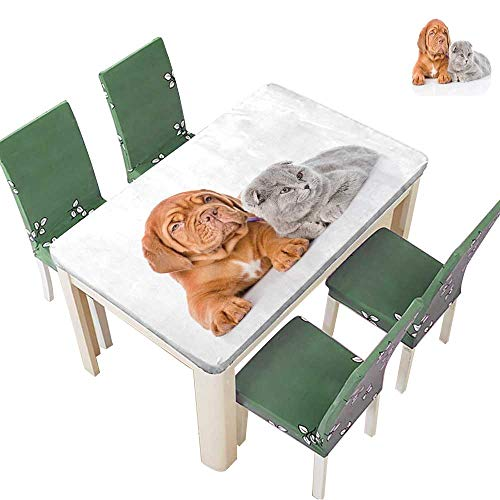 Printsonne Spring & Summer Outdoor Tablecloth, Bordeaux Puppy and Gray cat Lying Together Isolated on White Background Multicolor 54 x 102 Inch (Elastic Edge) ()