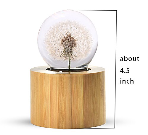 Mylifestyle Musical Box Real Specimens Dandelion Ball with Wood Base Music Box Gift for Christmas/Birthday/Valentine's Day,(Melody Happy Birthday to You) by Mylifestyle (Image #2)