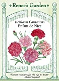 Heirloom Carnation, Enfant de Nice
