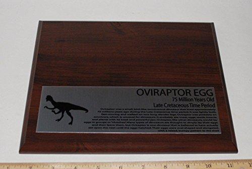 Oviraptor Dinosaur Egg Fossil Display Stand and Display Label (Fossil Dinosaur Eggs)