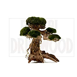 Bonsai Driftwood Aquarium Tree AM (8 Inch Height x 6 Inch Length) Natural, Handcrafted Fish Tank Decoration | Helps Balance Water pH Levels, Stabilizes Environments | Easy to Install