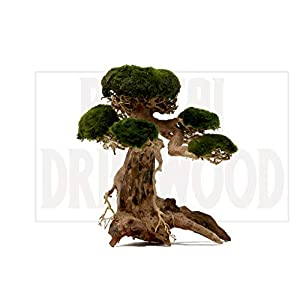Bonsai Driftwood Aquarium Tree AM (8 Inch Height x 6 Inch Length) Natural, Handcrafted Fish Tank Decoration | Helps Balance Water pH Levels, Stabilizes Environments |…