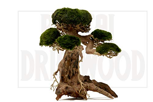 Bonsai Driftwood Aquarium Tree AM (8 Inch Height x 6 Inch Length) Natural, Handcrafted Fish Tank Decoration | Helps Balance Water pH Levels, Stabilizes Environments | Easy to Install ()