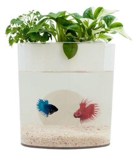 Aquadorables mini wick based aquaponics tank white for Betta fish aquaponics