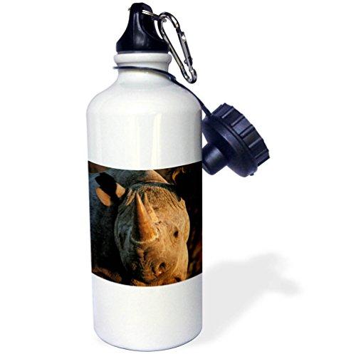 Africa Rhinoceros Horn - 3dRose Danita Delimont - Rhinos - Desert black rhinoceros portrait, Kalahari Desert, Africa - 21 oz Sports Water Bottle (wb_276412_1)