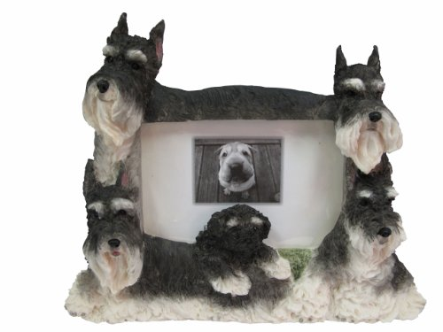 Schnauzer Picture Frame Holds Your Favorite 3 x 5 Inch Photo, A Hand Painted Realistic Looking Schnauzer Family Surrounding  Your Photo. This Beautifully Crafted Frame is A Unique Accent To Any Home or Office. The Schnauzer Picture Frame Is The Perfect Gift For Schnauzer Owners And Lovers!