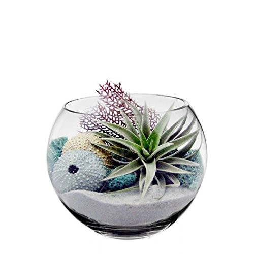 CYS EXCEL Glass Bubble Bowls Fish Bowls by Round Shaped Glass Bowls - Multiple Sizes - H:6